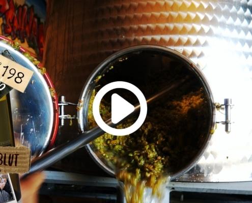 Weiter geht es mit dem Weisswein. Schonend pressen und klar filtrieren. Heute zeigen wir Dir wie wir unseren Weisswein machen.