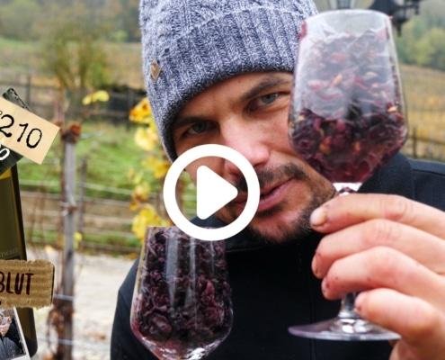 Ein guter Rotwein braucht eine gute Farbe. Aber wo kommt den die Farbe jetzt her? Das Fruchtfleisch in der Traubenbeere ist ja weiss! Wein gären, Trauben trocknen und Winzer Fitness, dass erwartet dich in unserm Weinvlog.