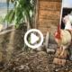 Der Fuchs kommt immer wieder, darum haben die Hühner Stallarrest. Wir bauen eine grosse Voliere, endlich haben die Hühner mehr Auslauf.